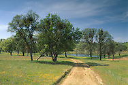 dirt road through green grass field and trees in spring on ranch in rural Santa Clara county, California