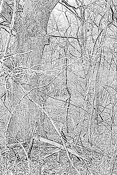 02Apr2010: A broken down gate and barbed wire fence overgrown with foliage stands in front of a mighty oak tree at Comlara Park, McLean County, Illinois<br /> <br /> This image was produced in part utilizing High Dynamic Range (HDR) or panoramic stitching or other computer software manipulation processes. It should not be used editorially without being listed as an illustration or with a disclaimer. It may or may not be an accurate representation of the scene as originally photographed and the finished image is the creation of the photographer.
