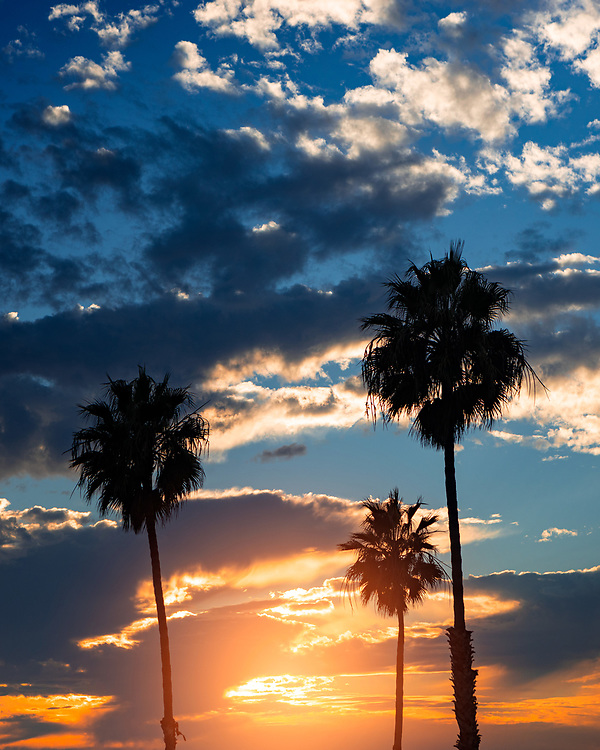 Palm Trees and Sunset Clouds in San Diego, California. ©justinalexanderbartels.com