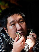 CHANGCHUN, CHINA - NOVEMBER 18: (CHINA OUT) <br /> <br /> Dancing Teacher Performs With Poisonous Creatures<br /> <br /> Tian Jiashi performs with his vipers on November 18, 2015 in Changchun, Jilin Province of China. 33-year-old dancing teacher Tian Jiashi has been fascinated and fed scorpions, vipers, centipedes, lizards and spiders at home for seven years in Changchun. Tian sometimes performed swallowing these poisonous creatures onstage even being bit hundreds of times. <br /> ©Exclusivepix media