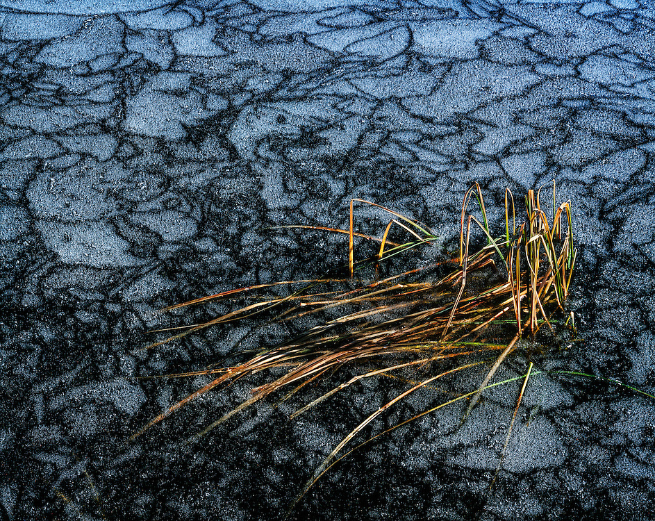 Limited Edition of 35 All Sizes. Frozen blades of grass trapped in icy Trinity Lake surface with patterns of frost and ice in Central Idaho.