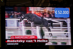 Veiling topper, 013, Radetzky Van't Heike<br /> BWP Hengstenkeuring -  Lier 2020<br /> © Hippo Foto - Dirk Caremans<br />  18/01/2020