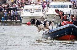 © Licensed to London News Pictures.  21/07/2018; Bristol, UK. Bristol Harbour Festival. Newfoundland water rescue dogs display for the crowds. People enjoy the good weather during the Bristol Harbour Festival in the city centre of Bristol. Bristol Harbour Festival is a 3 day extravaganza of dance, music, theatre, circus, ships and boats, arts and delicious food. The festival is free for all and brings over 250,000 people together each summer to celebrate Bristol's rich maritime history and enjoy some of the city's best music and entertainment. The festival takes place on the  20 - 22 July 2018. Photo credit: Simon Chapman/LNP