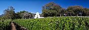 Vineyards on the Groot Constantia Farm, Cape Town, South Africa. Stitched Panoramic Images taken in and around Cape Town Images by Greg Beadle