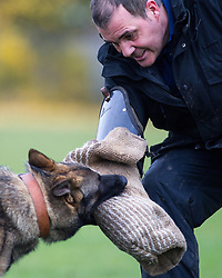 © Licensed to London News Pictures . 13/11/2012 . Manchester , UK . Adey Jones with 9 month old rescue German Shepherd , Jerry . Specialist handlers from Greater Manchester Police put police dogs through their paces at a training event . Greater Manchester Police are appealing for members of the public to donate unwanted dogs to the force . Photo credit : Joel Goodman/LNP
