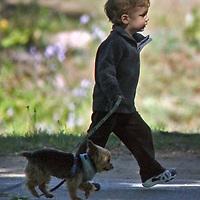 John Moynahan, the son of Tom Brady, walks Gisele's dog Vida in and around Boston. Photo by Mark Garfinkel