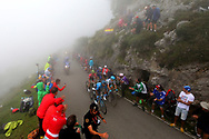 Nairo Quintana (COL, Movistar), Miguel Angel Lopez (COL, Astana Pro Team), Simon Yates (GBR, Mitchelton Scott) and Enric Mas (ESP, QuickStep Floors) during the 73th Edition of the 2018 Tour of Spain, Vuelta Espana 2018, Stage 15 cycling race, 15th stage Ribera de Arriba - Lagos de Covadonga 178,2 km on September 9, 2018 in Spain - Photo Kei Tsuji/ BettiniPhoto / ProSportsImages / DPPI
