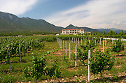 Vineyard. Biblia Chora Winery, Kokkinohori, Kavala, Macedonia, Greece