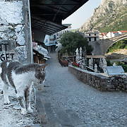 """MOSTAR, BOSNIA AND HERZEGOVINA - JUNE 28:  A cat seems to be looking towards the Old Bridge in front of a sign """"Don't Forget""""  on June 28, 2013 in Mostar, Bosnia and Herzegovina. The Siege of Mostar reached its peak and more cruent time during 1993. Initially, it involved the Croatian Defence Council (HVO) and the 4th Corps of the ARBiH fighting against the Yugoslav People's Army (JNA) later Croats and Muslim Bosnian began to fight amongst each other, it ended with Bosnia and Herzegovina declaring independence from Yugoslavia.  (Photo by Marco Secchi/Getty Images)"""