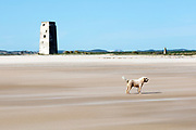 Funny dog staying against the wind on the beach