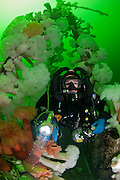 The wreck of the HMCS Saskatchewan is a popular destination for scuba divers in Nanaimo, Vancouver Island, British Columbia.