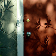 Leaves and their shadows on the door of a home