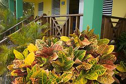 Caribbean, Puerto Rico, Vieques.  colorful garden at hotel.  PR