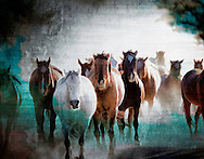 A herd of horses captured at the break of an Arizona dawn conveys natural equestrian serenity, trust, beauty, power, and grace.<br /> <br /> Craig W Cutler Photography.<br /> DesignLIFE by Craig W. Cutler Photography.