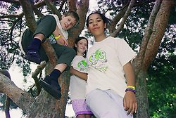 Group of children climbing a tree,