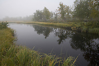 Reed-fringed pool at dawn in boreal forest, Sarek National Park, Laponia World Heritage Site, Sweden
