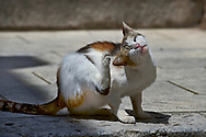 SERIES - UNRELIABLE-SIGHTINGS by PAUL WILLIAMS-  Cat Dubrovnik