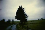 bomen   images