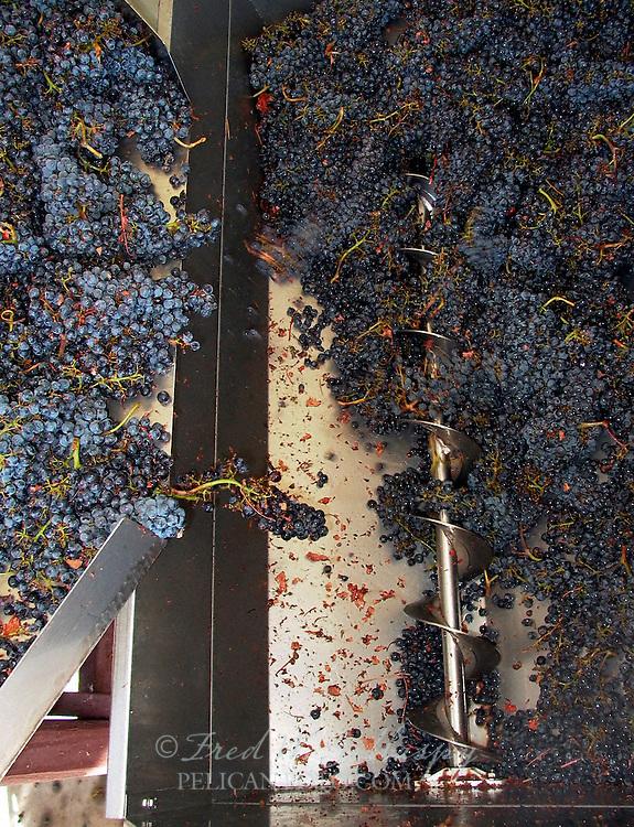Wine Grape Harvest 0104A
