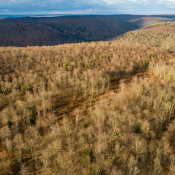 Drone view of a forest in Johnsonburg, Pennsylvania. Spring.
