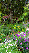Wellington Botanical Garden, North Island, New Zealand