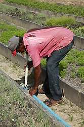 Man working on Organiponico Vial; Pinar del Rio; Cuba,