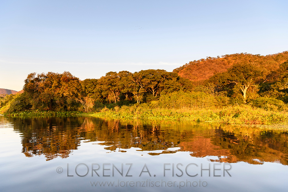 Riverine landscape with shrubs and trees in the Pantanal, Mato Grosso do Sul, Brazil
