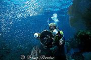 underwater videographer and schooling baitfish<br /> on shallow reef off Freeport, Grand Bahama Island,<br /> Bahamas, ( Western Atlantic Ocean )  MR 143