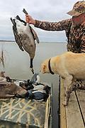 Successful hunter examining the bag during a Manitoba Diver Hunt