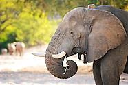 Mammals - Mammalia