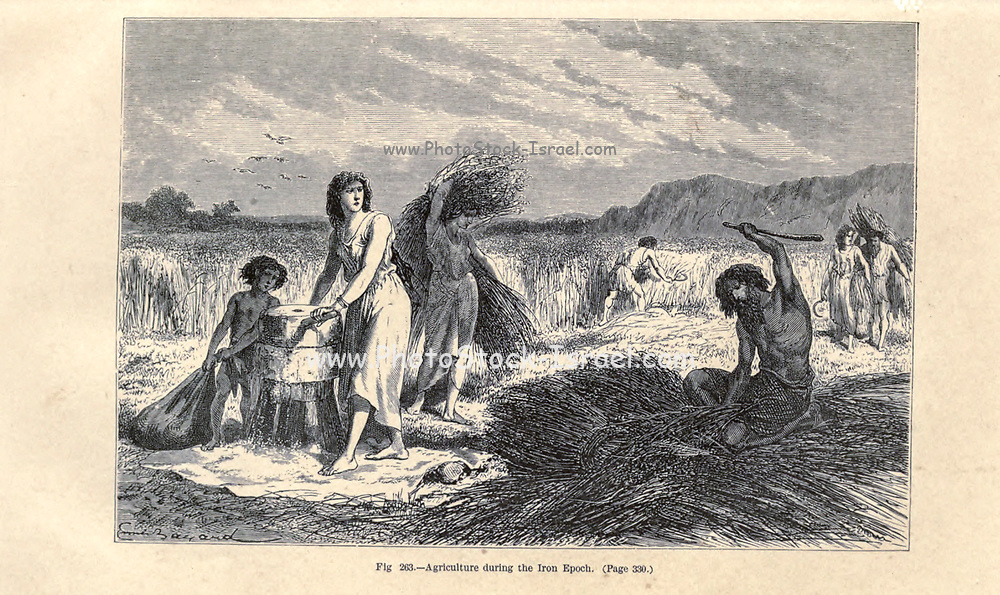 Iron Age agriculture, according to the French illustrator Emile Bayard (1837-1891), illustration Artwork published in Primitive Man by Louis Figuier (1819-1894), Published in London by Chapman and Hall 193 Piccadilly in 1870