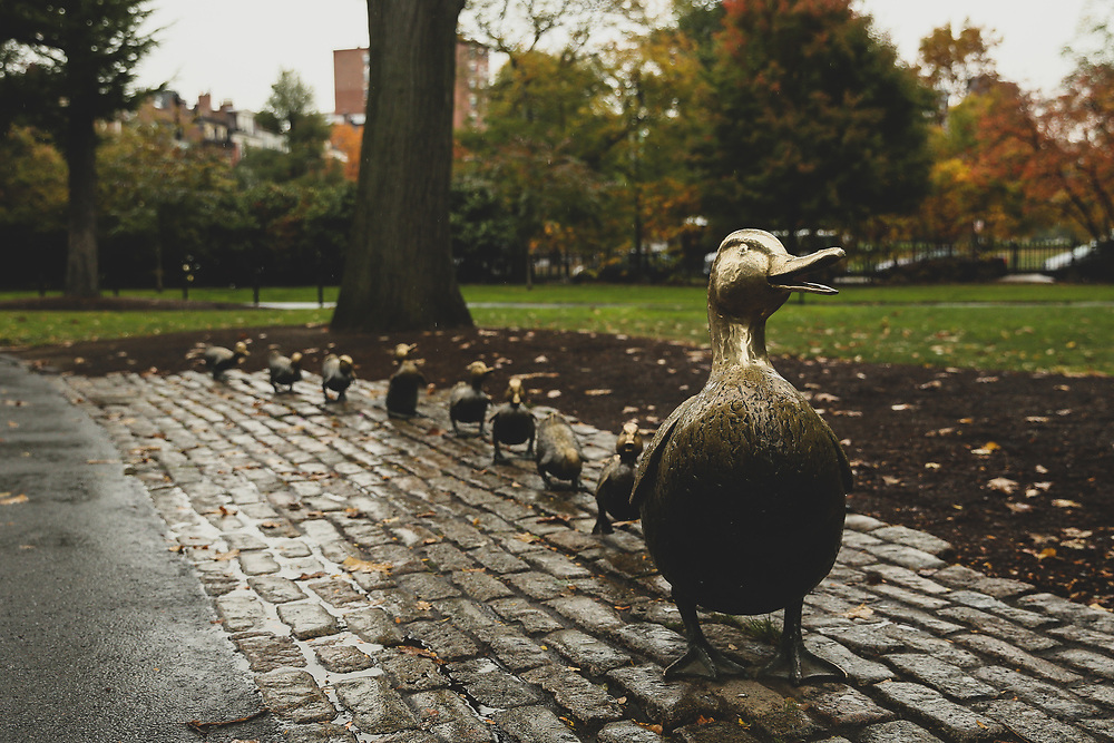 The Make Way for Ducklings statues seen on a rainy autumn morning in Boston.