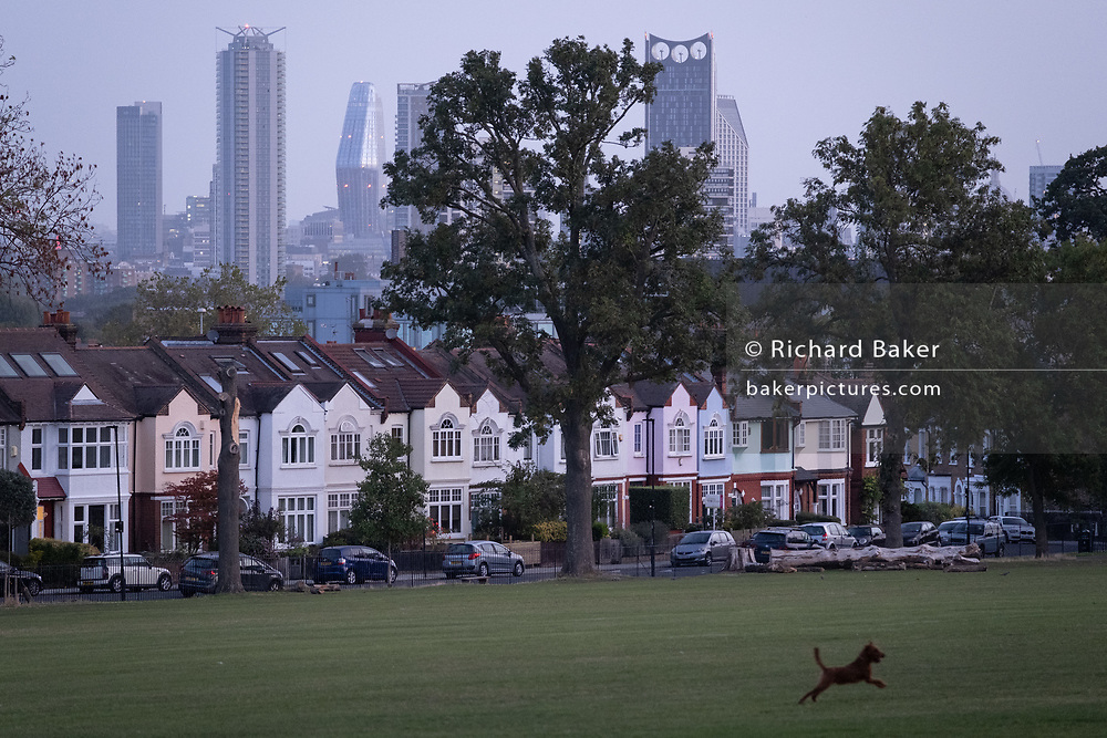 A dog chases crows in front of south London suburban homes with a background of the city towers and office buildings, in Ruskin Park, Lambeth, on 17th September 2020, in London, England.