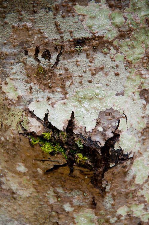 Tree Bark and Moss, San Juan Island, Washington, US