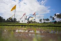 Ni Made Murni in rice fields, Bali