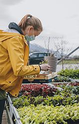 THEMENBILD - eine Angestellte einer Gärtnerei stellt eine Auswahl an Salatpflanzen und Kräuter für eine Kunden in der Aussenanlage zusammen, in Kaprun am Dienstag 14. April 2020 // an employee of a nursery puts together a selection of salad plants and herbs for a customer in the outdoor area in Kaprun Austria on 2020/04/14. EXPA Pictures © 2020, PhotoCredit: EXPA/ Stefanie Oberhauser