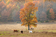 Animals feed in a field on an autumn morning at the Sanctuary for Animals in Westtown, N.Y.,  on Oct. 23, 2020.