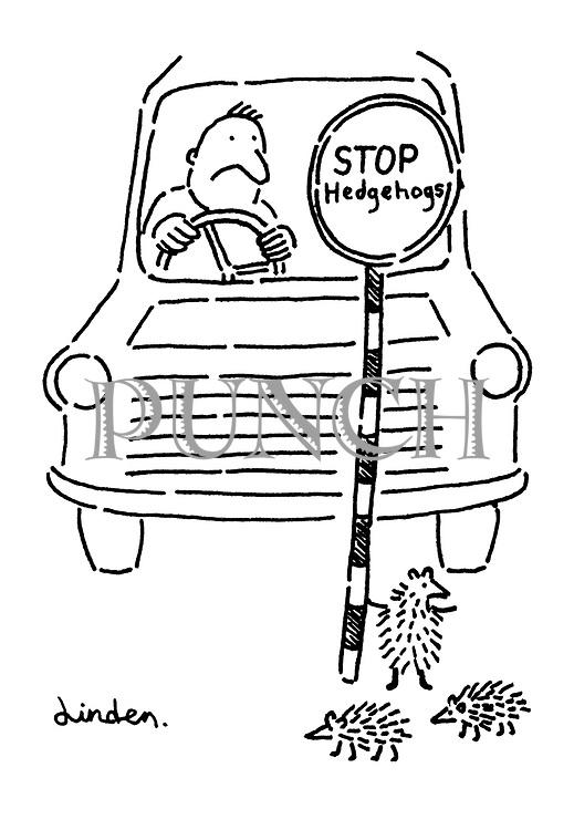 (hedgehogs crossing road).