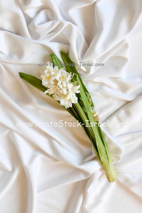 Silk flower on white background