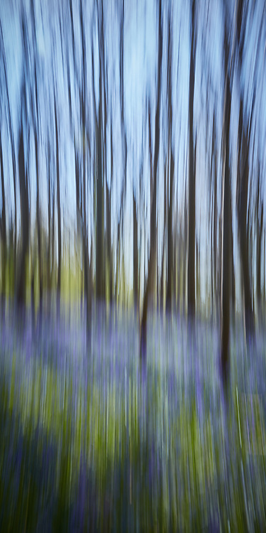 """To purchase this Limited Edition Print, please use the link in the menu.<br /> <br /> I could smell the bluebells on the morning air long before I could see them. With the young trees still free of leaf, I had an opportunity to capture my impression of the permeating sense of colour and smell from the bluebells.<br /> <br /> Acrylic Gallery Print 24"""" x 12""""<br /> Limited Edition of 15<br /> <br /> £225 + shipping"""