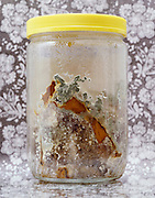 glass jar with rotten moldy produce against floral background