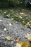 fallen Autumn leaves on fthe ground in Wicklow Ireland
