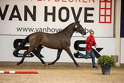 018, Spirit van het Leliehof<br /> BWP Hengstenkeuring 2021<br /> © Hippo Foto - Dirk Caremans<br />  11/01/2021