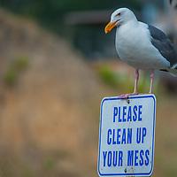 A gull perches on a sign below a fisherman's sink by the harbor at El Granada, near Half Moon Bay, California.