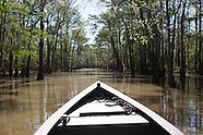 Louisiana's Wetlands