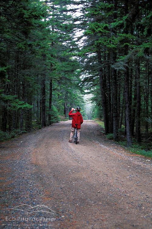 Acadia N.P., ME. Biking. Western Mountain Road. Boreal Forest.