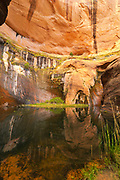 A view of quiet Hidden Pool, an oasis within Coyote Gulch, Grand Staircase-Escalante National Monument, Utah.