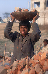 Family at work together breaking bricks for road mending; young boy lifting broken bricks onto carts pulled by buffalo,
