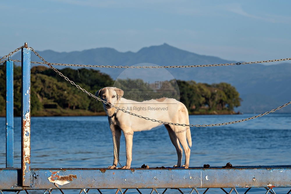 A dog stands on a dock along Lake Catemaco, Veracruz, Mexico. The lagoon which flows into the Gulf of Mexico is one of the best preserved coastal wetlands and mangroves forests in Mexico and part of the Los Tuxtlas biosphere reserve.