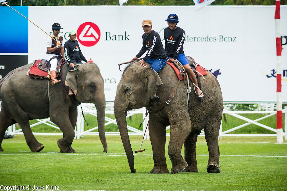 """28 AUGUST 2013 - HUA HIN, PRACHUAP KHIRI KHAN, THAILAND:  Elephants, mahouts and polo players warm up at the King's Cup Elephant Polo Tournament in Hua Hin, Thailand. The tournament's primary sponsor in Anantara Resorts and the tournament is hosted by Anantara Hua Hin. This is the 12th year for the King's Cup Elephant Polo Tournament. The sport of elephant polo started in Nepal in 1982. Proceeds from the King's Cup tournament goes to help rehabilitate elephants rescued from abuse. Each team has three players and three elephants. Matches take place on a pitch (field) 80 meters by 48 meters using standard polo balls. The game is divided into two 7 minute """"chukkas"""" or halves. There are 16 teams in this year's tournament, including one team of transgendered """"ladyboys.""""     PHOTO BY JACK KURTZ"""